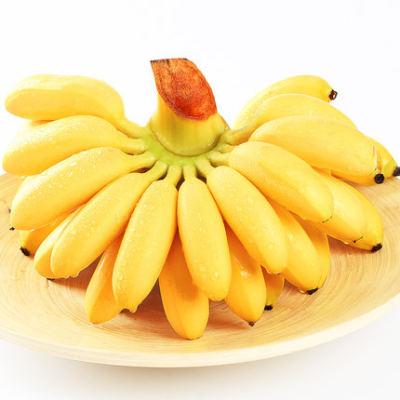 【耘凡兔000】广西香蕉新鲜小米蕉水果香焦小香蕉9斤自然熟当季整箱