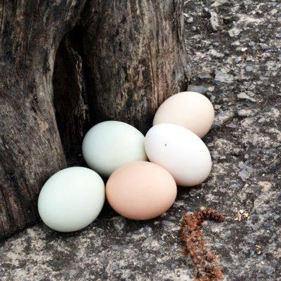【耘凡兔940】太行山散养土鸡蛋农家天然30枚走地鸡山坡散养笨鸡蛋草鸡蛋(15个土鸡蛋15个绿壳蛋)