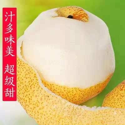 【砀山特产】大树堂砀山酥梨自家果园l基l地梨子直发