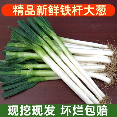 山东大葱精品铁杆大葱5斤/10斤可选去皮大葱