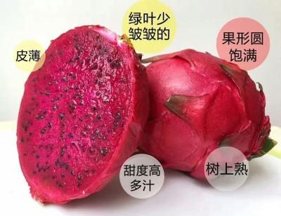 金都一号红心火龙果 不催熟零添加 原生态树上熟农家果园直摘 大果4-6个净重4.5斤