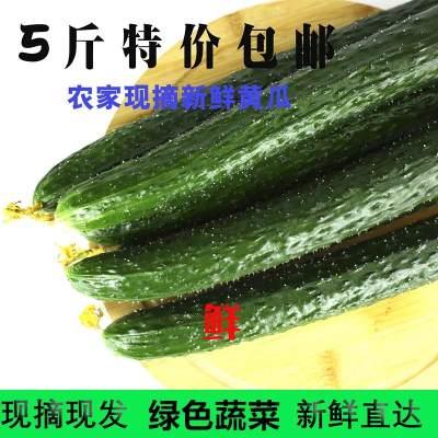 【5斤包邮】新鲜黄瓜生吃长黄瓜农家自种现摘应季新鲜蔬菜批发净重5斤包邮