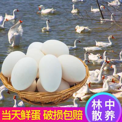 鹅蛋 土鹅蛋新鲜鹅蛋农家杂粮喂养鹅蛋6/12枚装