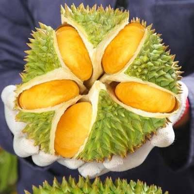泰国金枕头榴莲新鲜带壳当季水果进口包邮2-10斤巴掌榴莲一箱【优品】