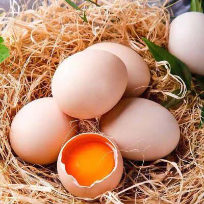 鸡蛋农家散养土鸡蛋40枚新鲜正宗营养土鸡蛋