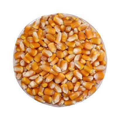 玉米粒 大粒 干玉米粒玉米籽鸽子鸡鸭鸟鸽子饲料打窝鱼饵10斤包邮【优品】
