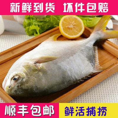 野生海捕金鲳鱼新鲜海鲜水产金昌鱼1斤/条金昌鱼2斤起
