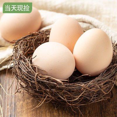 农家散养鸡蛋乡土农家鸡蛋30/60枚装