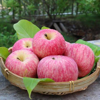 【耘凡兔000】特价苹果新鲜红富士10斤多汁脆甜水果脆甜红富士(特价苹果如果介意,请慎拍)